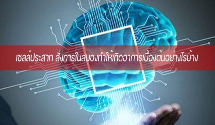 เซลล์ประสาท สั่งการในสมองทำให้เกิดอาการเบื้องต้นอย่างไรบ้าง