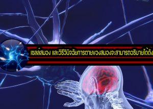 เซลล์สมอง และวิธีวินิจฉัยการตายของสมองจะสามารถอธิบายได้ดังนี้