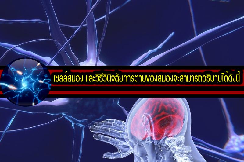 เซลล์สมอง